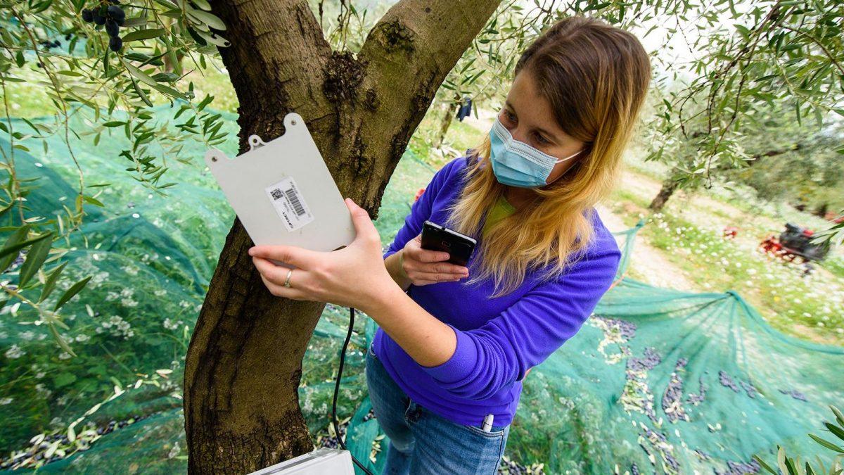 Maker Faire: così l'hi-tech salva le api, cambia il food e aiuta i cittadini in smart working