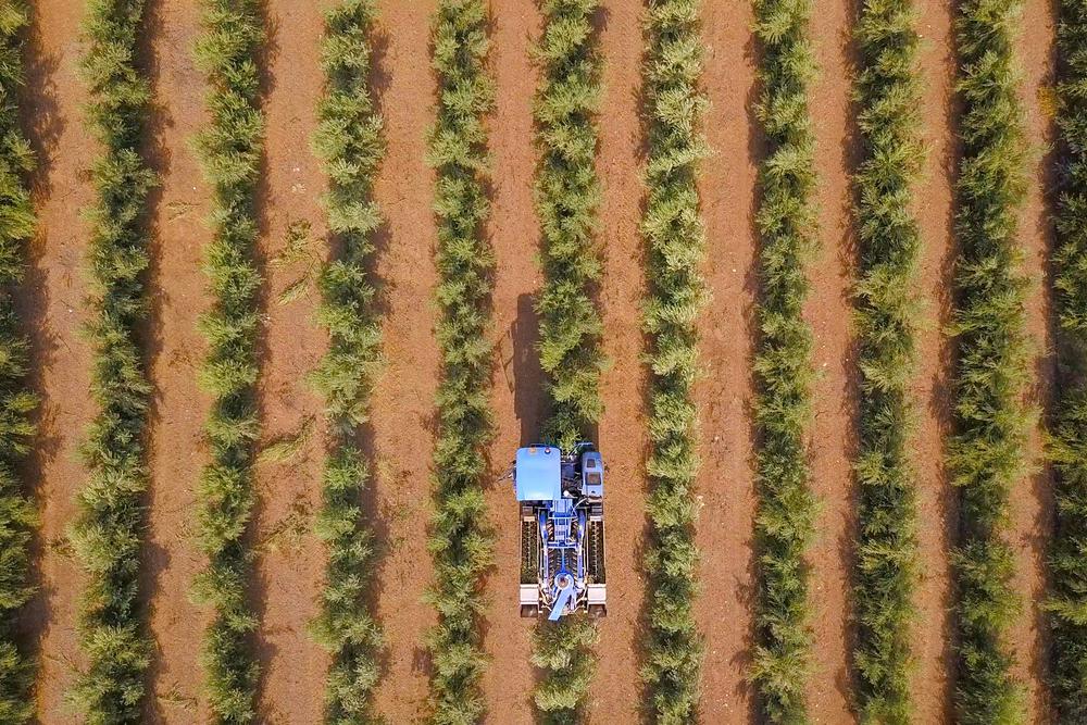 Agricoltura 4.0: la startup Elaisian salva ulivi, capitalizzando 1 milione di euro